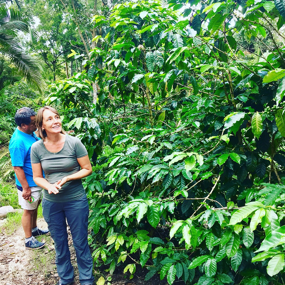 Peru coffee tour in Villa Rica -- Coffee tours in Peru also go to Satipo and Chanchamayo