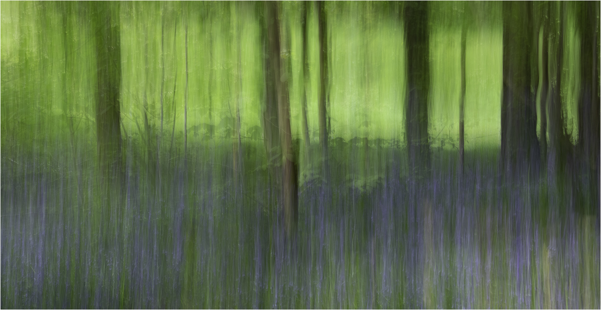 Highly Commended Bluebell Wood