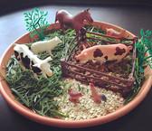 🐮🐷 Edible mud farm tray 🐷🐮 Today we