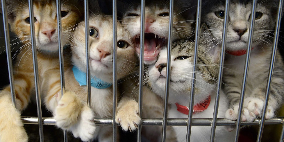 kittens in cages.jpg