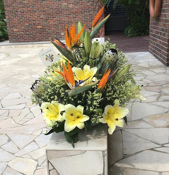 Star-Gazer Lilies, Birds of Paradise, Queen Protea