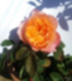 20200530_091017-1.jpg
