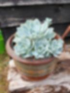 Cacti or Succulent Caroline Warren.jpg
