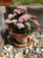 Indoor Plant Caroline Warren.jpg