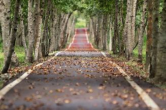 woodland-656969_1280.jpg