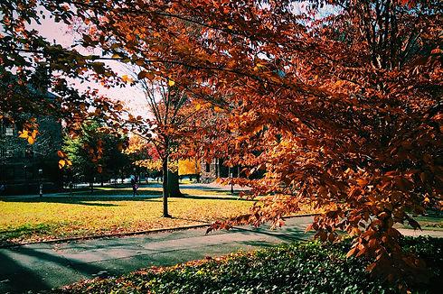 tree-2545828_1920.jpg