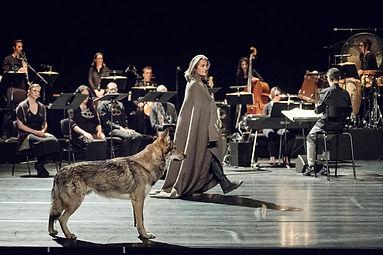 Marcus, Loup, chien loup Tchécoslovaque.