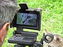 Loup, chien loup Tchécoslovaque, spectacle animalier, spectacle médiévale, théâtre, cinéma, tournage, lion, événementiel, dresseur de loups pour le cinéma, dresseur de chien, location d'animaux, dresseur animalier, loups,