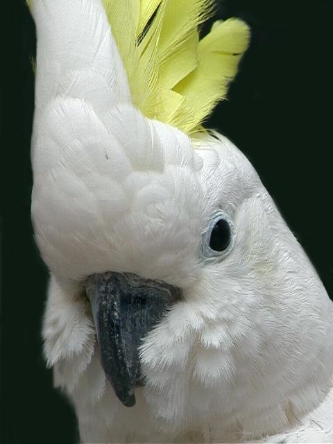 Location d'animaux - Oiseaux