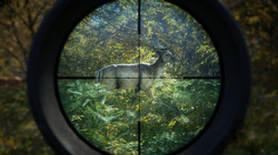 Call of the Wild beta key