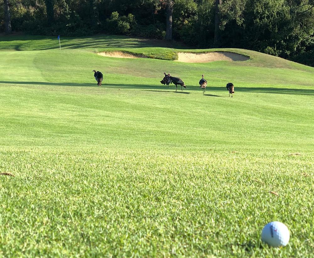 pinnacle golf balls