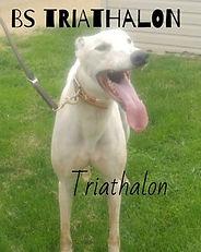 Greyhound_BS_Triathlon-big.jpg