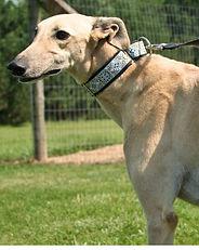 Greyhound_Amf_Whisk-big.jpg