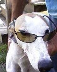 Greyhound_Kiowa_Meltdown-_2big.jpg