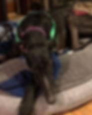 Greyhound_Take_Out_Tom-big.jpg