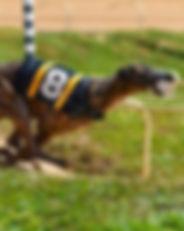 Greyhound_Flying_Vagabond-_3big.jpg