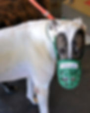 Greyhound_Go_Greytescape-big.jpg