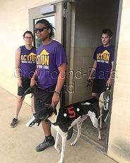 Greyhound_GF_Calamity_Kate-_2big.jpg