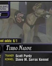 Greyhound_Turbo_Nadine-_2big.jpg