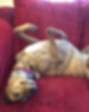 Greyhound_EF_Anna_Blizzard-_3big.jpg