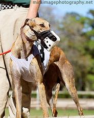 Greyhound_Jean_Krupa-_2big.jpg