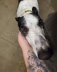 Greyhound_T_Top_Episode-big.jpg