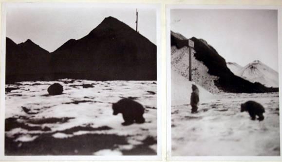 Amatörfoton från björnbesöket 1934