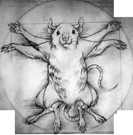 Micro-CT & IVIS