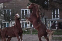 Bien être des chevaux