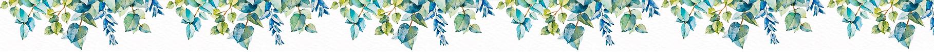 banniere-eucalyptus-01.png