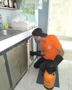 termite-control-check