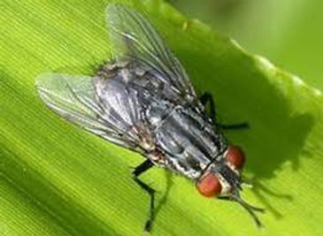 house-fly-jansen-pest-control.jpg