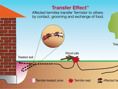 Termite Control with Fipronil