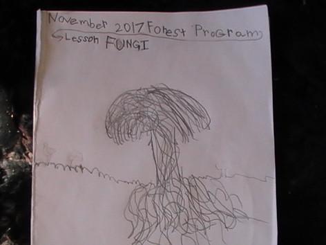 Nature Journal: Fungi and Mycelium focus.