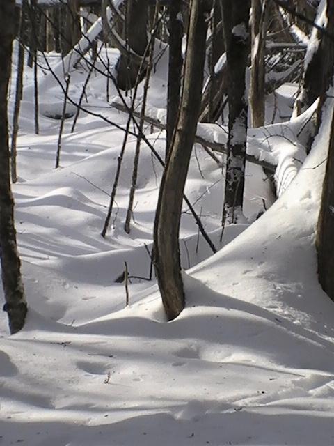 February shadow ski terrain