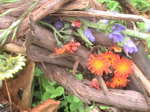 nature art...grape vine and wild flowers