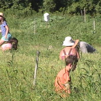 Teenagers enjoy summer work in Lanark's Plan B Community Garden (July, 2020)