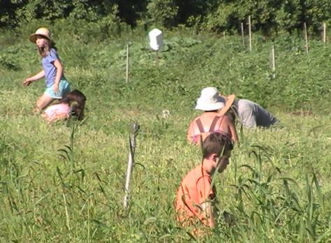 Teenagers enjoy summer work in Lanark's Plan B Community Garden