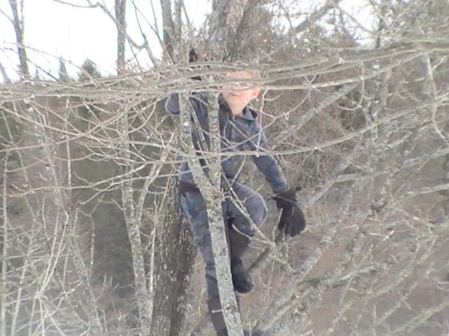 Tree Climbers Extraordinaire