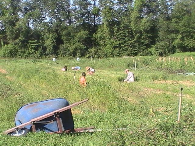 Plan B Community Garden's Teenage Work Crew