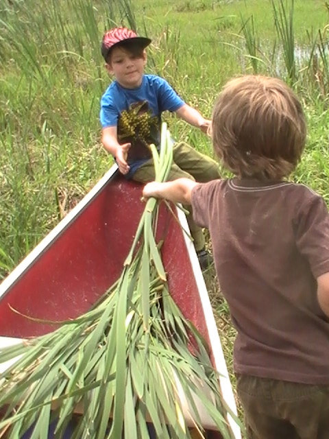 team work and cooperative play- foraging cattail for building the bush bed