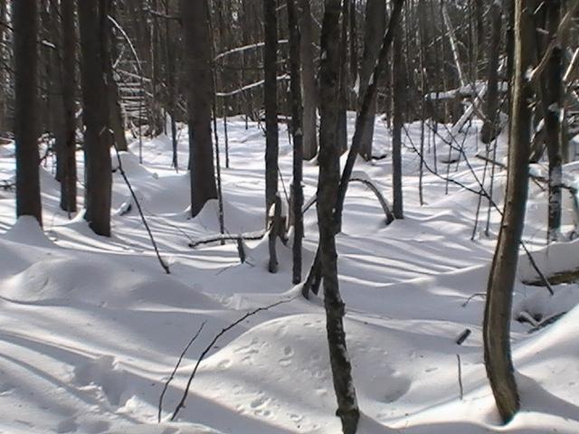 February snow moon snow fall
