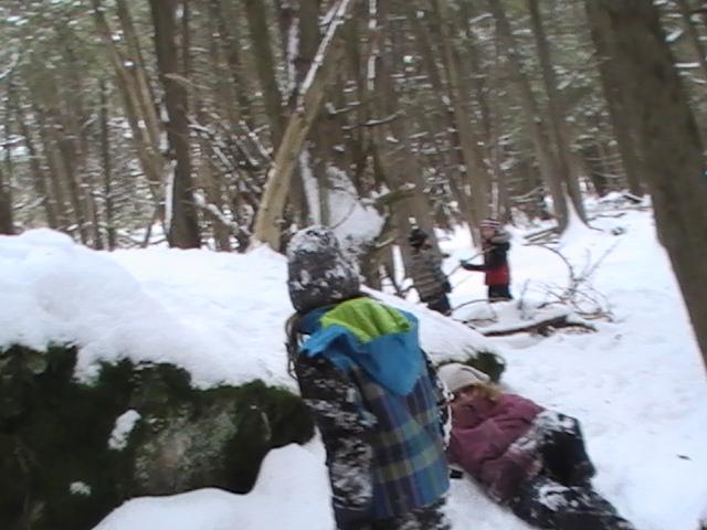 exploration in  the cedar grove