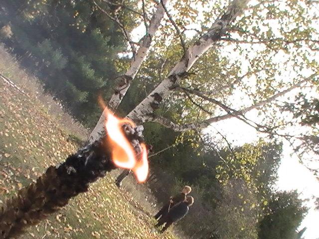 Hag'sTaper (Mullein torch)