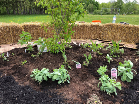 Planting Cardinal Direction Perennial Gardens in the Outdoor Classroom