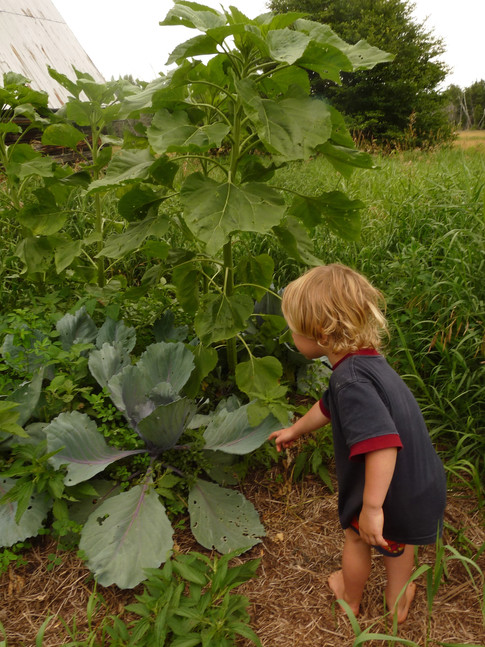gardens and permacultural approaches to caring for the earth and eachother