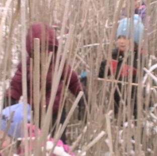 seek and find in the typha