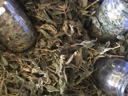Nettle Tea (Urtica dioica)