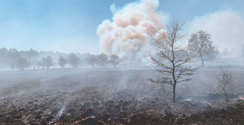 Nettetaler Feuerwehr unterstützt beim Waldbrand