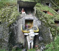 Pays Toraja : un dernier voyage à dos de buffle.